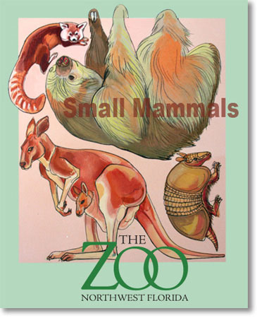 Charlotte Daley Zoo Posters